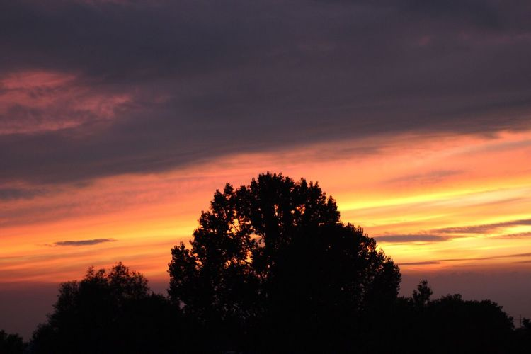 Tree Sunset Silhouette Beauty In Nature Sky Nature Scenics Orange Color Tranquil Scene Dramatic Sky Tranquility Growth Cloud - Sky Dusk No People Outdoors 20 Minutes Later Canon EOS 1300D Canonphotography Canon No Edit/no Filter