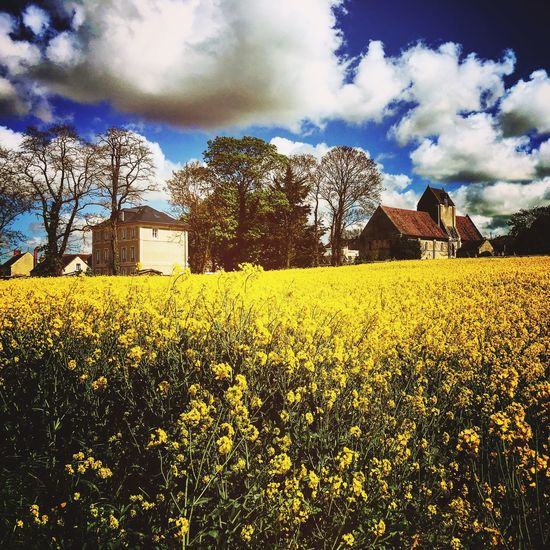 Yellow Beauty In Nature Nature Building Exterior Architecture Campaign Campagne Agriculture Landscape Colza Field Colombelles Castle Church