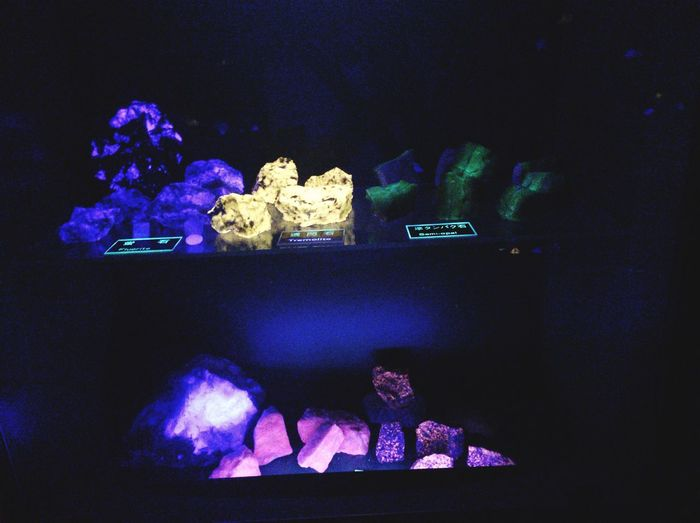 Night Indoors  Aquarium Illuminated Real People One Person