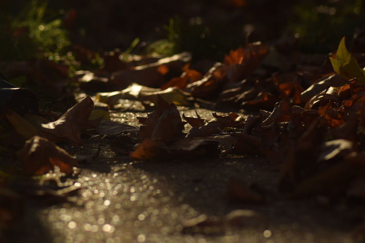 Leaves🌿 Pavement Close-up Textured  Selective Focus Outdoors Nature