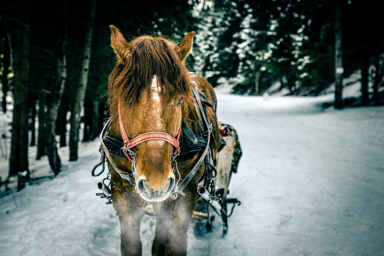 Animal Themes Animal_collection Day Domestic Animals Horse Horse Cart Nature Sleigh Sleighride Winter Winter_collection
