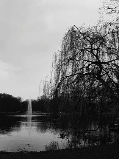 Water Spraying Tree Power In Nature Sky Cloud - Sky
