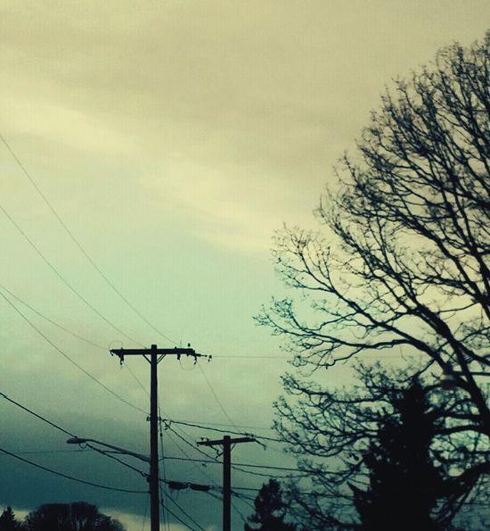 Trees Onadrive Landlines