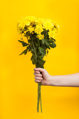 Yellow flower in front of a yellow background Bouquet Close-up Day Flower Freshness Holding Human Body Part Human Hand Lifestyles One Person Real People Studio Shot Yellow Yellow Background EyeEmNewHere