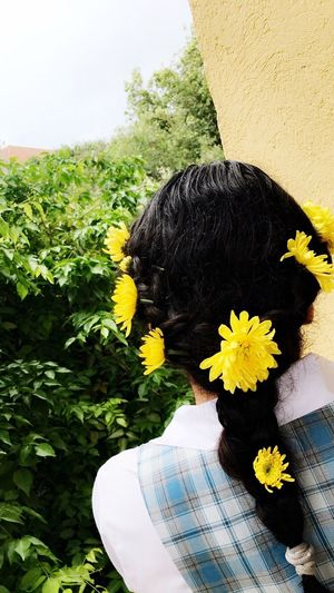 Flower Yellow One Person Sunflower Nature