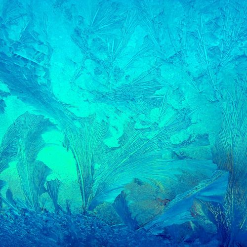 Color Palette Ice Winter Impressions Beauty Of Nature Iceflowers Iceblue