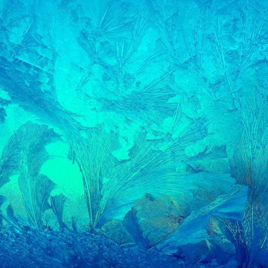 Winter Winter Wonderland Icy Window Ice Crystal Color Palette Ice Winter Impressions Beauty Of Nature Iceflowers Iceblue Frozen Frost Cold Cold Temperature