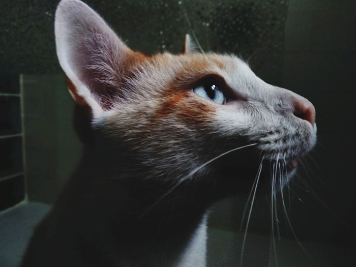 Close-up of cat looking away