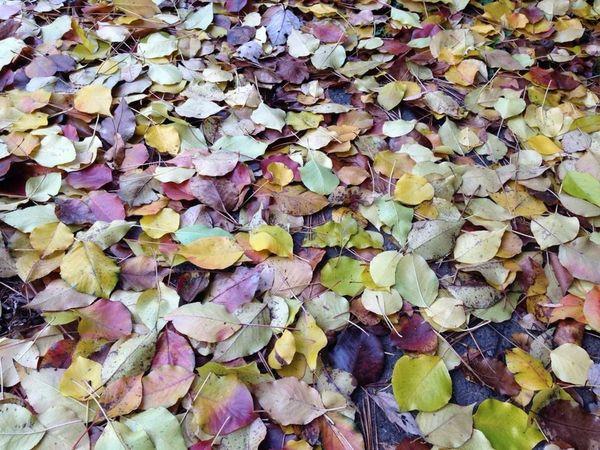 🌳🍂😊 Fall Leaves