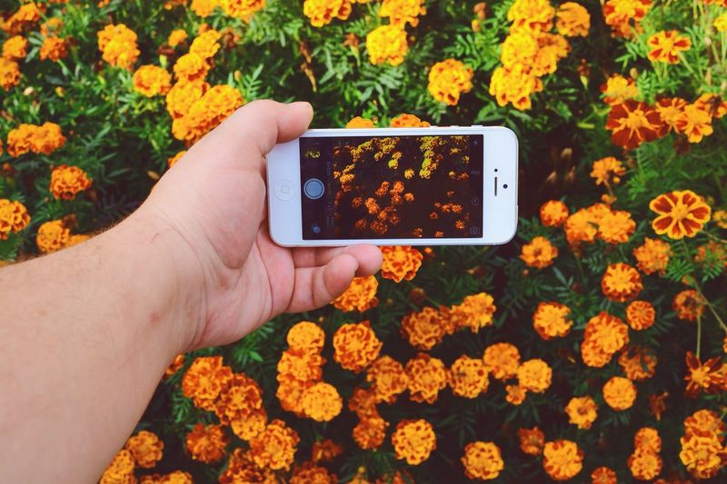 Cropped image of man photographing marigold on field