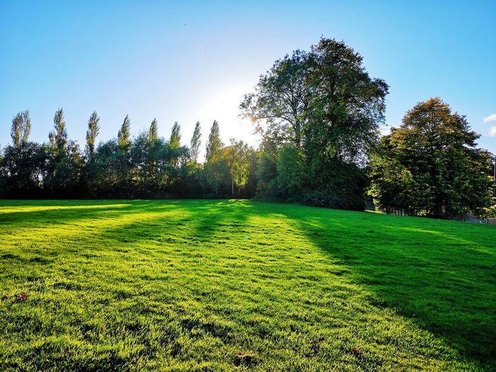 Tree Clear Sky Sunlight Sky Grass Green Color