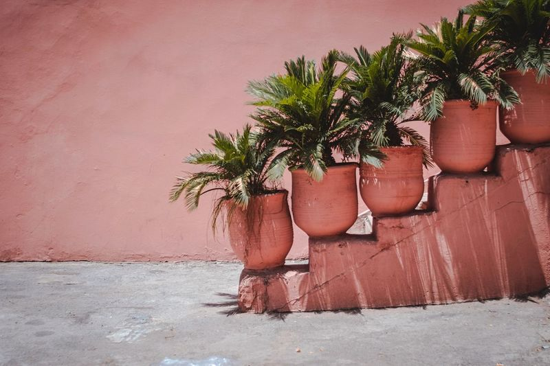 GARDEN — Morocco Composition Palmtrees Backyard Nopeople Mood Fujifilm Vintagelens Pink Plant Tree Wall - Building Feature Nature Growth No People Day Potted Plant Built Structure Wall Outdoors Building Exterior Sunlight Beauty In Nature Red Brick Footpath City