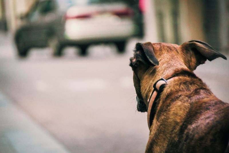 Outdoors Day Nature Mammal Domestic Animals Domestic Animal Themes Pets One Animal Animal Vertebrate Dog Canine Focus On Foreground No People Animal Body Part Looking Pet Collar Animal Head  Selective Focus Looking Away Dogs Dogslife City City Life A New Beginning A New Perspective On Life