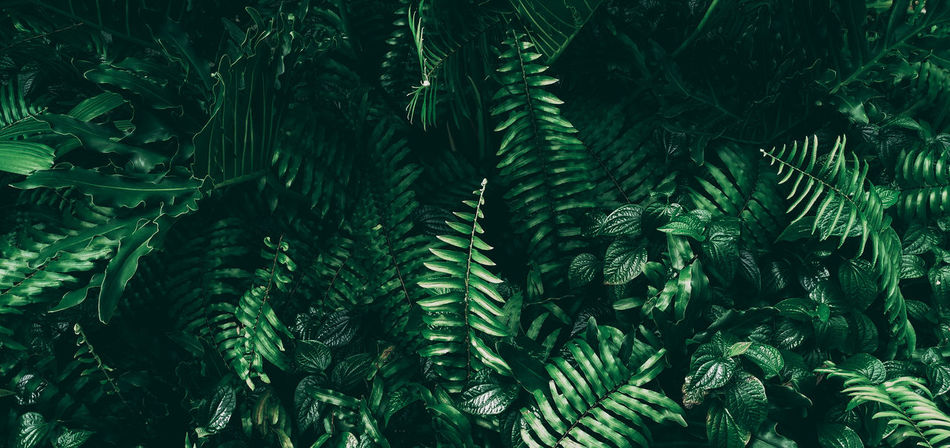 Darktone Backgrounds Beauty In Nature Close-up Coniferous Tree Day Fern Fir Tree Freshness Full Frame Green Color Growth Land Leaf Leaves Lush Foliage Nature Needle - Plant Part Outdoors Pine Tree Plant Plant Part Season  Summer Tree