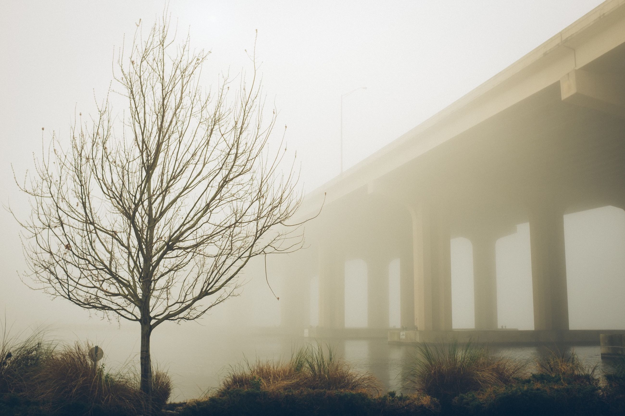 fog, bare tree, foggy, tree, built structure, architecture, weather, tranquility, copy space, branch, nature, bridge - man made structure, connection, day, tranquil scene, outdoors, no people, scenics, water