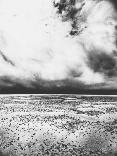 Watt Meer Sea Hallig Hooge Dramatic Sky Wattenmeer Bird Water Sky Cloud - Sky Landscape Close-up