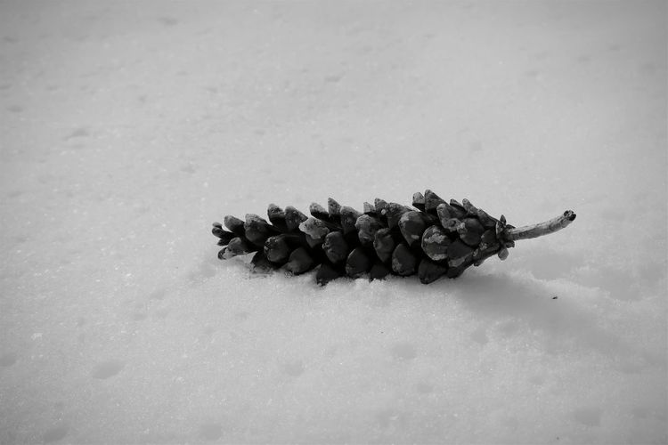 High angle view of pine cone