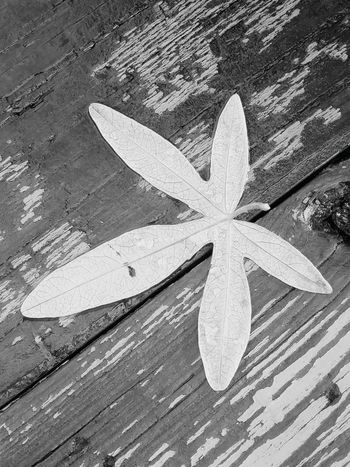 Single Object High Angle View Wood - Material Leaf Fallen Leaf No People Blackandwhite Close-up SummersEnd Treethugger Cold Temperature Winters Here Naturerox Leaves Monochrome Photography