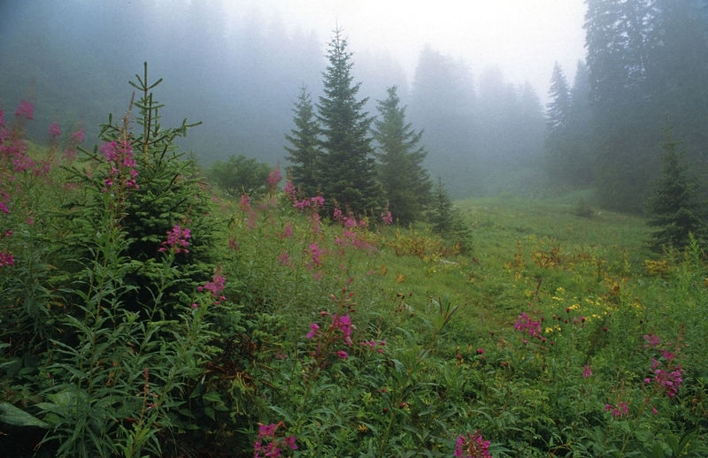 Scenic view of red flowering trees in forest