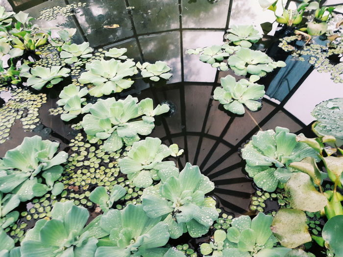 Day Growth No People High Angle View Plant Leaf Nature Flower Close-up Beauty In Nature Freshness Reflection Water Water Reflections