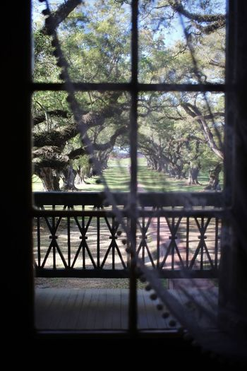 Window Into History Peek Through Sheer Curtain Plantation New Orleans EyeEm Lousiana Oak Trees Oak Alley Window Indoors  Day No People Tree Shadow Architecture Nature Focus On The Story The Architect - 2018 EyeEm Awards The Traveler - 2018 EyeEm Awards The Creative - 2018 EyeEm Awards