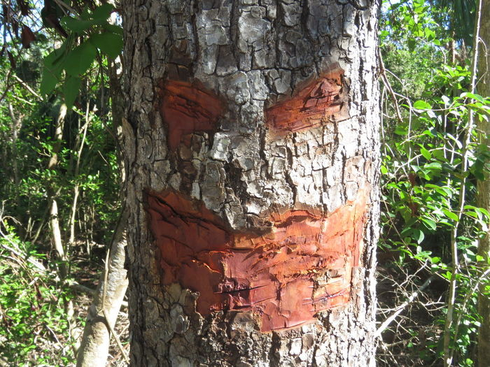 Evil Evil Tree Tree Face Scary Scary Face Nature Outdoors