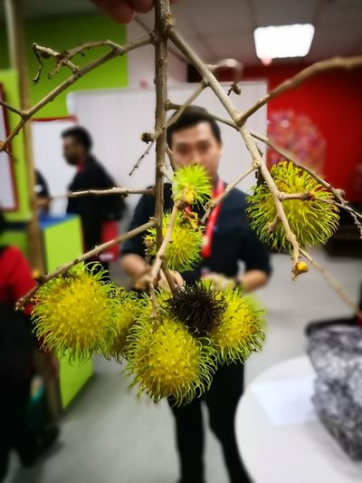 Rambutans Close-up Tree Only Men Young Adult Nature Adults Only Indoors  Adult Young Women People Business Day