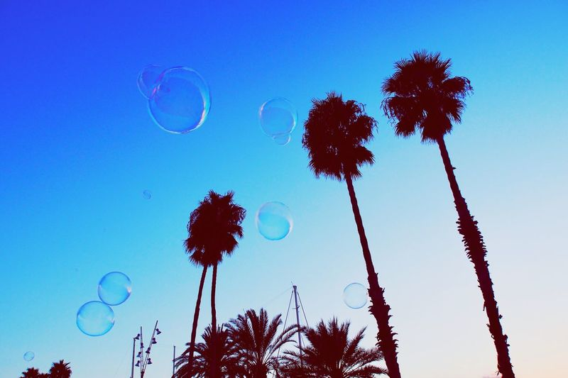 Bubbles and palm trees Low Angle View Tree Blue Nature Growth No People Beauty In Nature Palm Tree Clear Sky Sky Outdoors Scenics Tranquil Scene Fragility Day Barcelona Bubbles Blowing Bubbles Giant Bubble Soap Bubbles Blue Sky Sky And Clouds