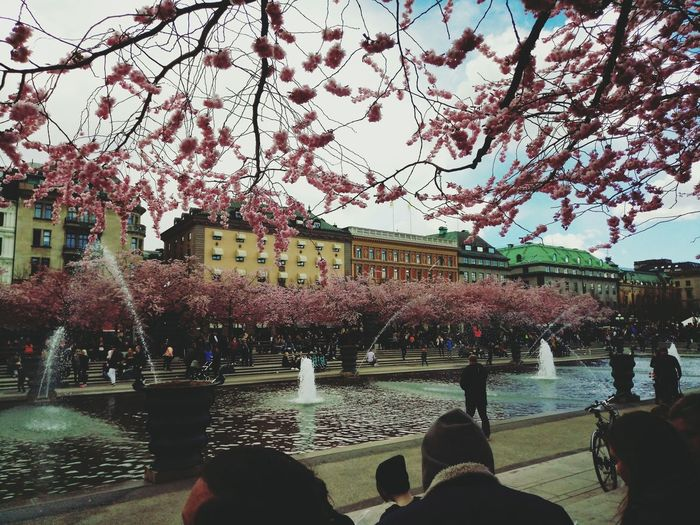 Tree Water Flower Sky Outdoors Beauty In Nature Building Exterior Architecture People Cherryblossoms Streetphotography Stockholm Sweden