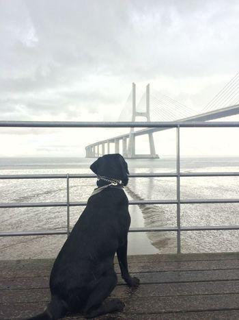 Animal Themes Bestfriend Bridge - Man Made Structure Mansbestfriend Ringo Enjoying The View Trainning Photography