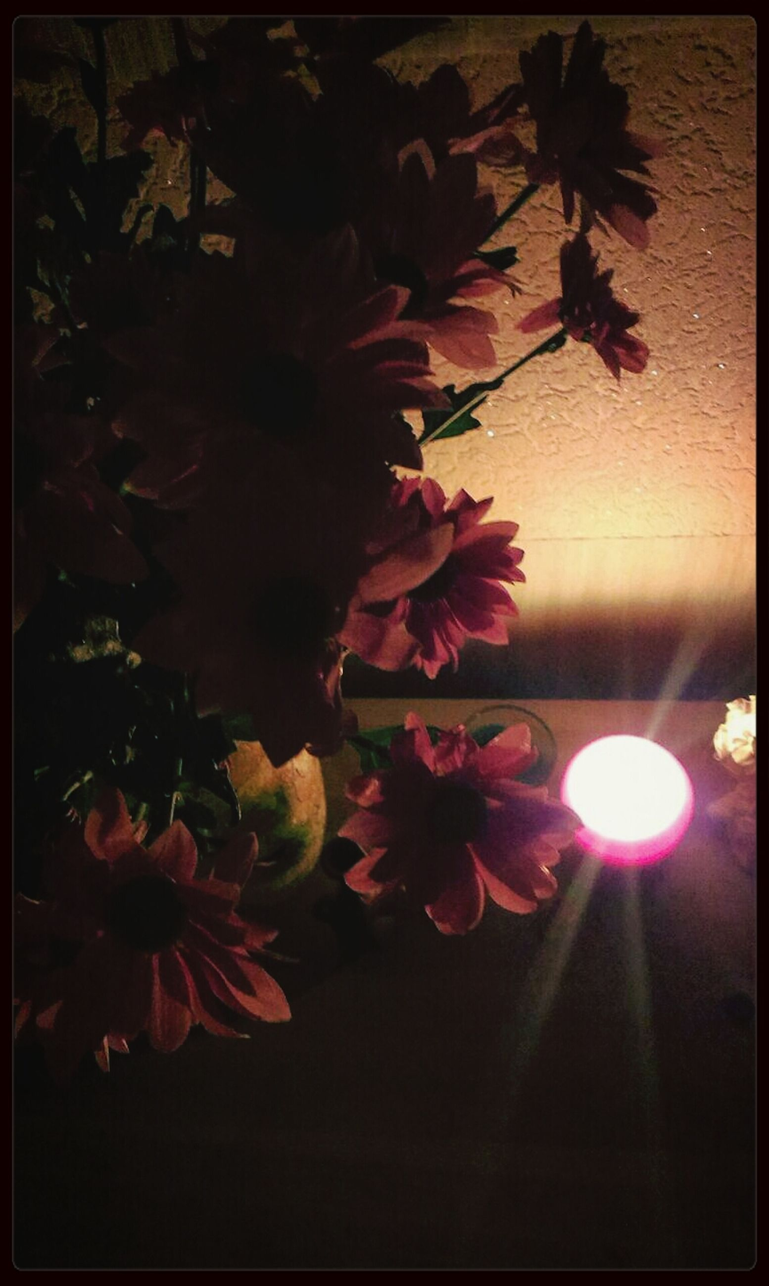 flower, growth, transfer print, fragility, auto post production filter, low angle view, freshness, branch, beauty in nature, petal, nature, plant, leaf, in bloom, pink color, close-up, blossom, tree, indoors, no people