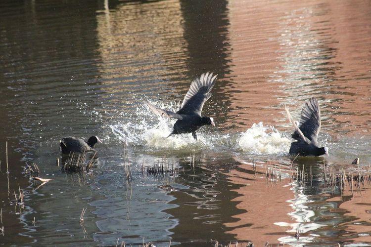 Fight Bird