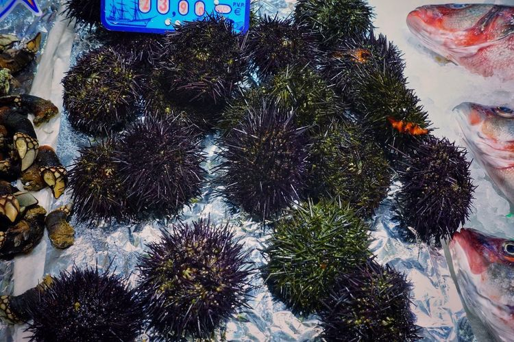 Food Seafood Madrid SPAIN Gourmet Delicious Market Shop Mercado Ocean Cold Temperature Sea Urchin Sea Urchins Fish Close-up Animal Spiny Globular Star Cluster Animals Echinoderms Test Tube Feet