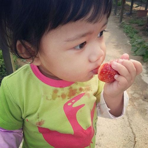Budak kecik paling happy...dapat makan strawberi fresh dari pokok... ShortVacation Cameronhighlands Brinchang Rajuhillstrawberryfarm