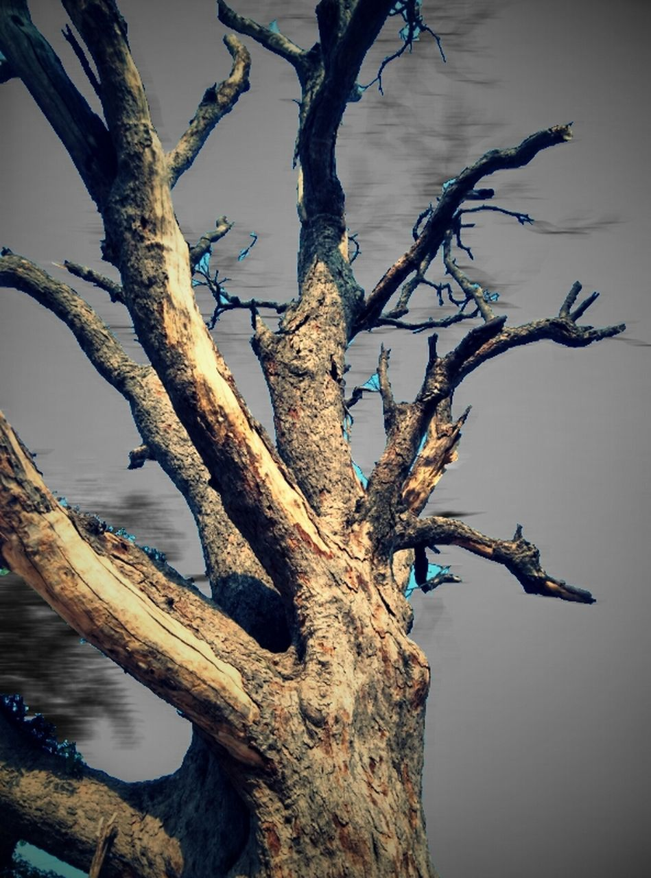 tree, tree trunk, branch, bare tree, dead plant, dead tree, nature, no people, outdoors, lake, day, beauty in nature, sky, close-up
