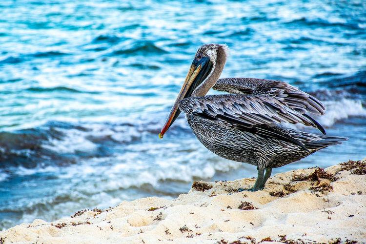 Bird on rock by sea