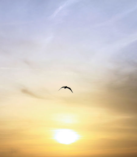 Atmosphere Atmospheric Mood Bird Cloud - Sky Colours Colours Of Nature Composition Fly Away Flying Morning Morning Sky Nature Nature Perspectives Pure Relaxing Moments Seagull Silhouette Sky Sun Sunrise
