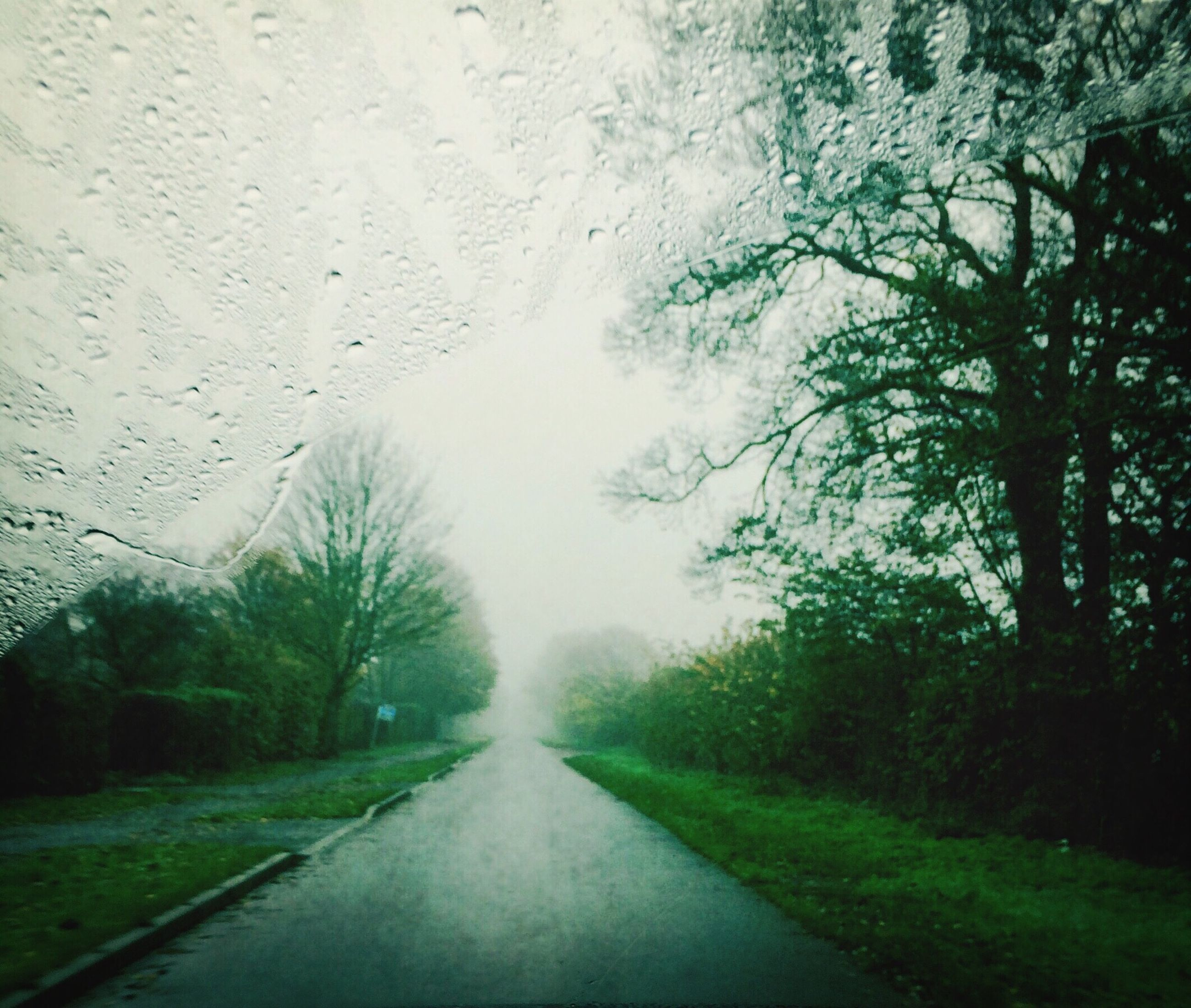 the way forward, diminishing perspective, road, tree, transportation, vanishing point, wet, weather, sky, rain, transparent, nature, country road, grass, empty road, growth, day, drop, glass - material, tranquility