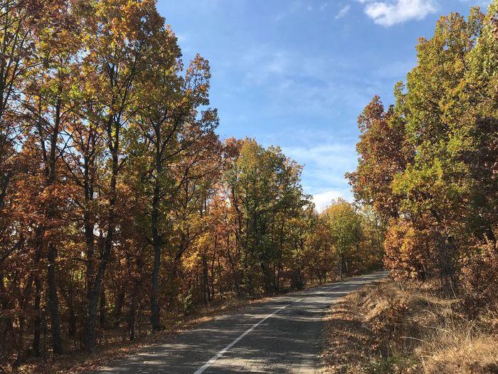 Tree Plant Change Autumn Sky Nature Road
