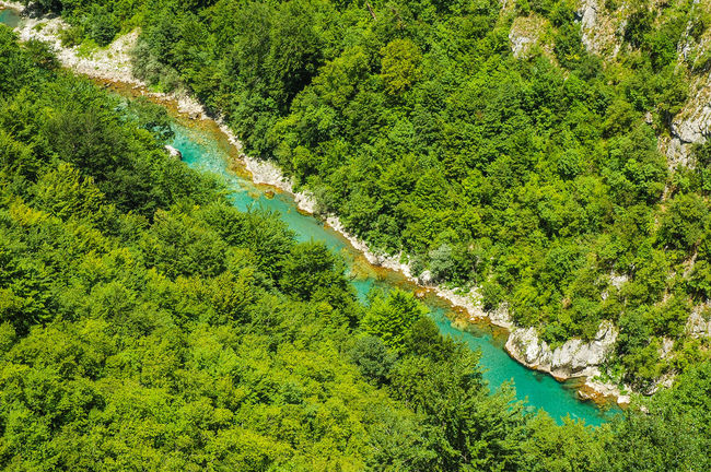 Tara canyon, Montenegro. The second deepest canyon in the World after the Grand Canyon, USA Canyons Montenegro🌊💙👈 River View Riverside Tara National Park Tara Canyon Balkans Beauty In Nature Canyon Canyoning Deep Europe Forest Green Color Montenegro Nature Outdoors River Riverbank Scenics - Nature Tara River Tranquility Tree Turquoise Water