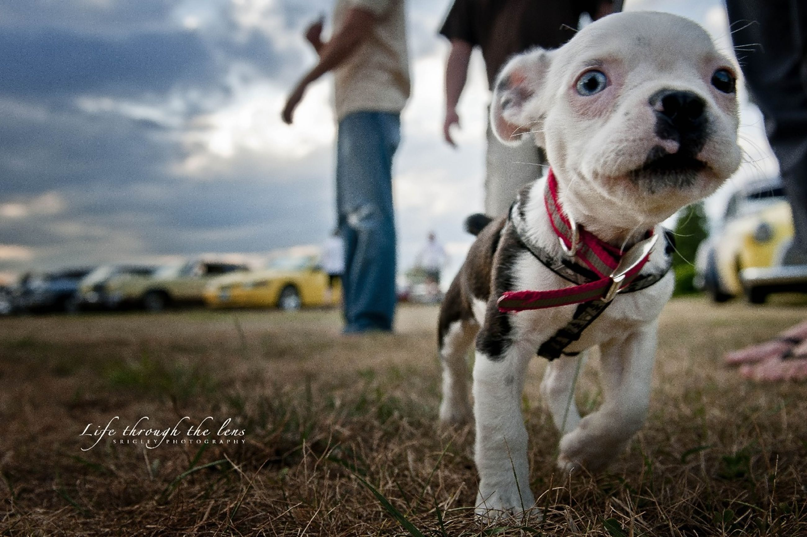 dog, domestic animals, pets, animal themes, mammal, focus on foreground, field, one animal, lifestyles, grass, leisure activity, incidental people, playing, day, outdoors, standing, sunlight, playful