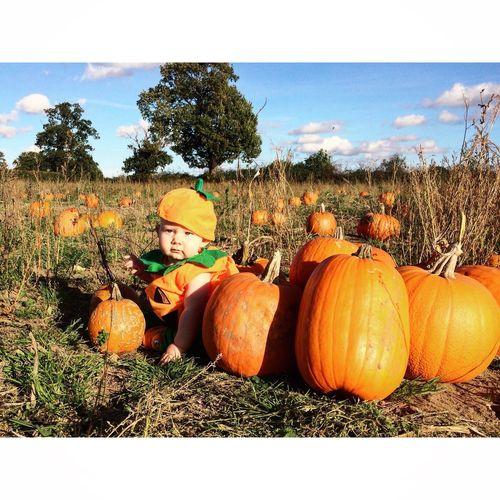 Pumpkin Pumpkins Pumpkinbaby Halloween Oranges Greens Octobersun Outdoors Field Bluesky Clouds Outdoorbaby Autumn Nature Jack O Lantern