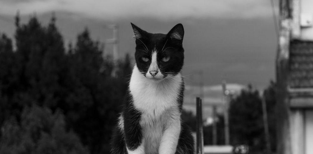 Close-up of black cat against sky