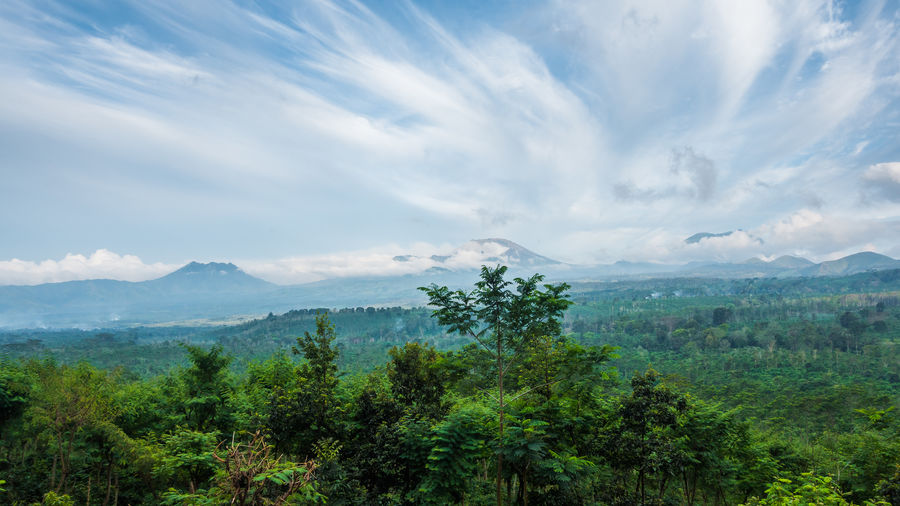 Volcano view in Java. Volcano INDONESIA ASIA Landscape Tropical Forest Tree Cloud - Sky Plant Scenics - Nature Beauty In Nature Environment Mountain No People Green Color Rainforest Java