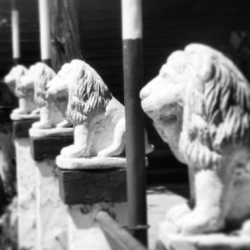 The Lions of Sannine Lebanon Depth Of Field