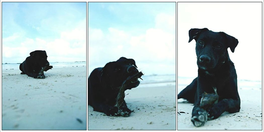 Summer Dogs Seychellesdog