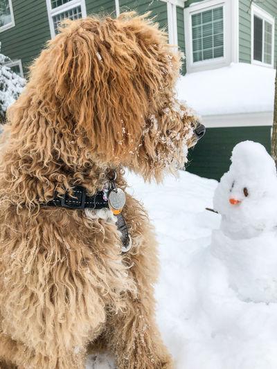 Dog lying down on snow