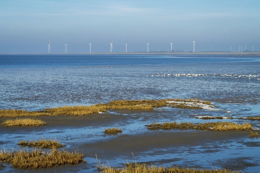 Beauty In Nature Day Ebbe Horizon Over Water Nature Nature Nature On Your Doorstep Nature Photography Nature_collection No People Outdoors Scenics Sea Sky Snow Snow ❄ Tranquil Scene Tranquility Waddensea Water Windmill The EyeEm Collection Premium Collection Getty Images