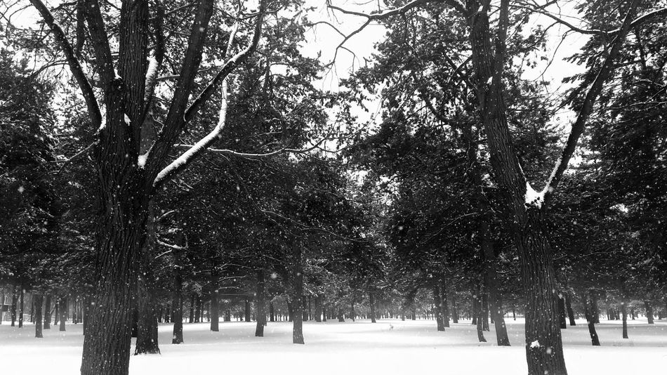 Let it snow, let it snow, let it snow...😊 Forest Nature_collection Nature Light And Shadow Taking Photos Monochrome Blackandwhite Black And White Black & White Black&white Nature Photography EyeEm Nature Lover Naturelovers It's Cold Outside Snow Snowing Snow Day Cold Winter Cold Days