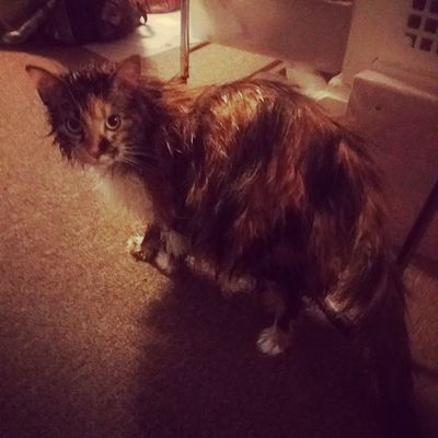 Well Gizmo needed a bath today...